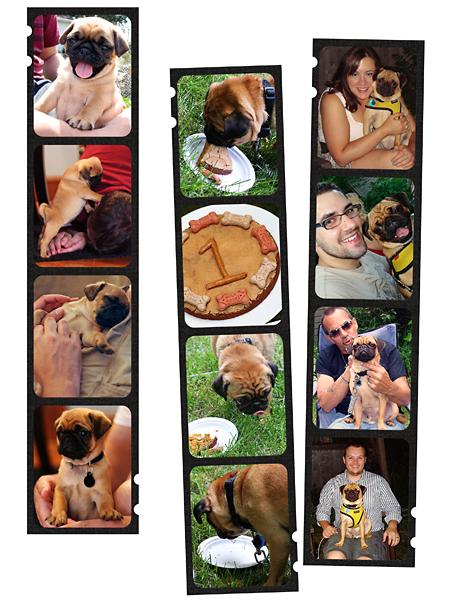 Rocco's 1st Birthday_web