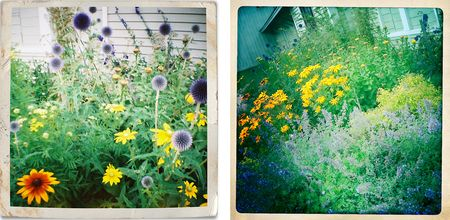 Lyplyp_diana and hipsta_flowers